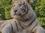 12455 – Finca con Zoo y terreno 60 hectárias | 12347-1-150x110-jpg