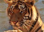 12455 – Finca con Zoo y terreno 60 hectárias | 12347-6-150x110-jpg