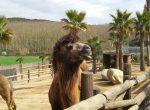 12455 – Finca con Zoo y terreno 60 hectárias | 12347-9-150x110-jpg