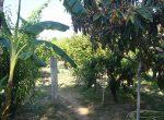 11198 – Masia con terreno de 1.5 Ha a la venta en Vilanova i la Geltru | 9047-7-150x110-jpg